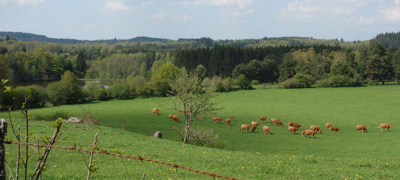 Flayat, Nouvelle-Aquitaine, France