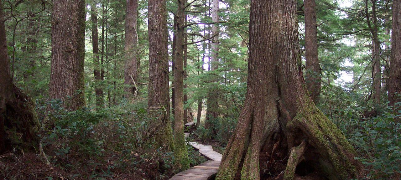 Tofino Botanical Gardens, Tofino, British Columbia, Canada