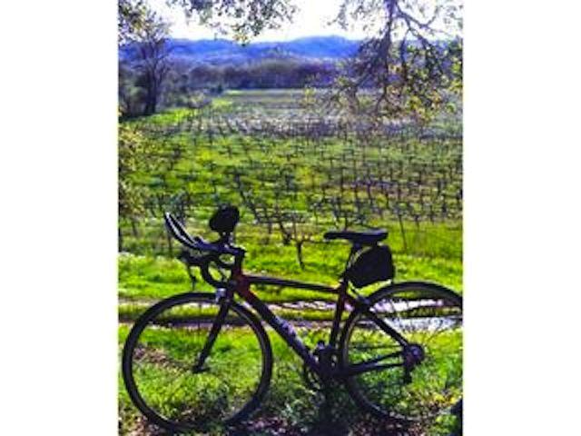 Dry Creek Vineyard (vinoteca), Healdsburg, California, Estados Unidos
