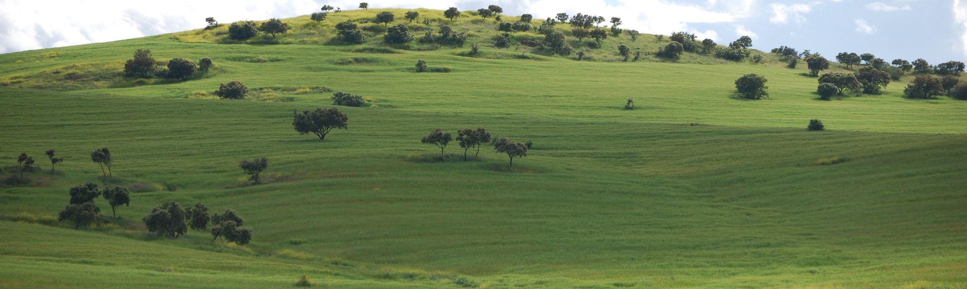 Cabeza la Vaca, Extremadura, Spain