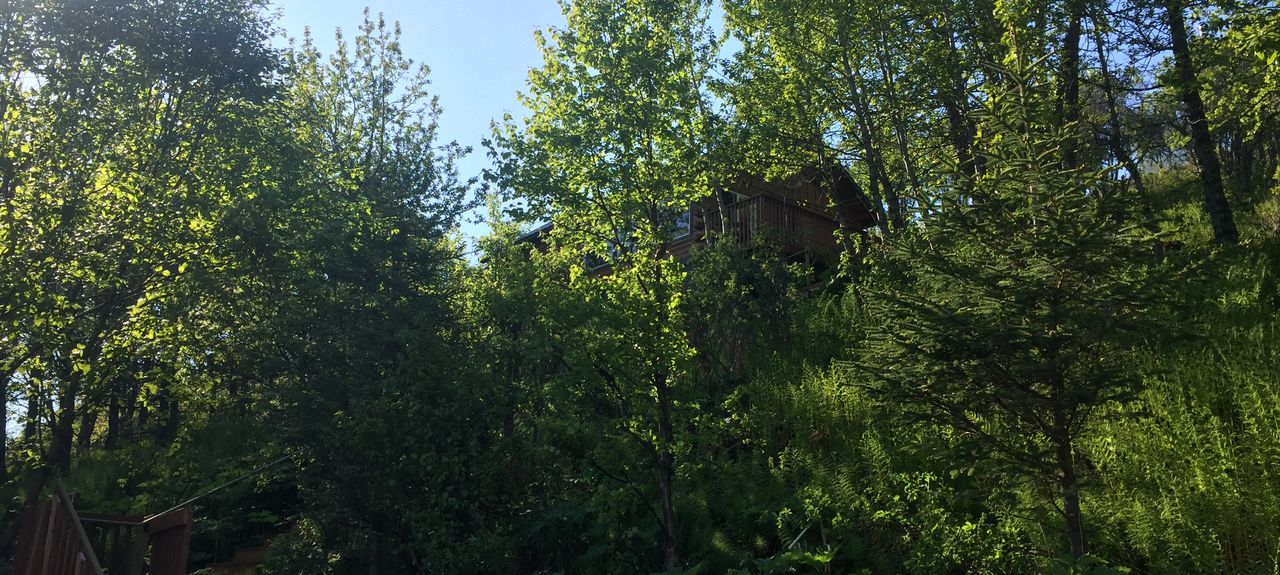 Kachemak, AK, USA