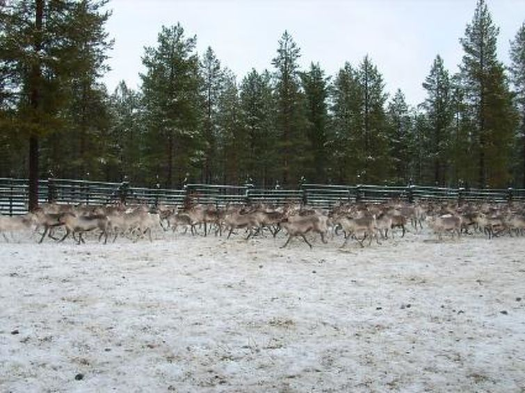 Sodankylä, Lappland, Finland