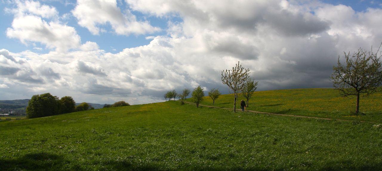 Bellenberg, Steinheim, North Rhine-Westphalia, Germany