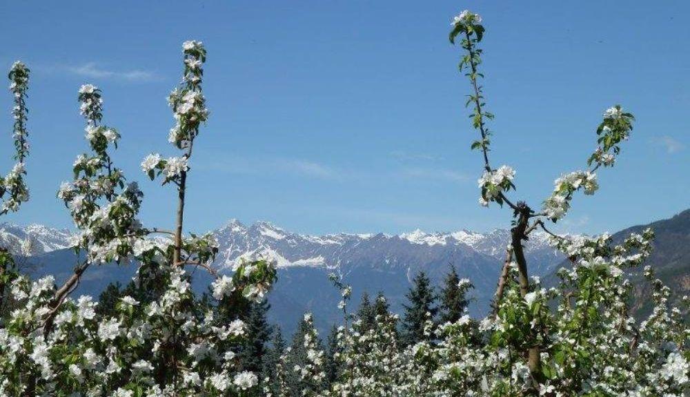 Kaltern an der Weinstraße, Alto Adige, Trentino-Alto Adige/South Tyrol, Italy