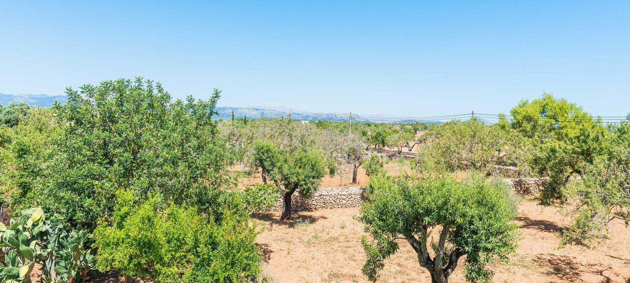Platja d'Alcúdia, Alcúdia, Baleariske Øer, Spanien