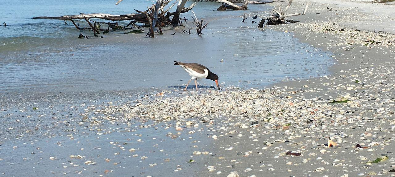 Lowdermilk Beach Park, Naples, Florida, Vereinigte Staaten