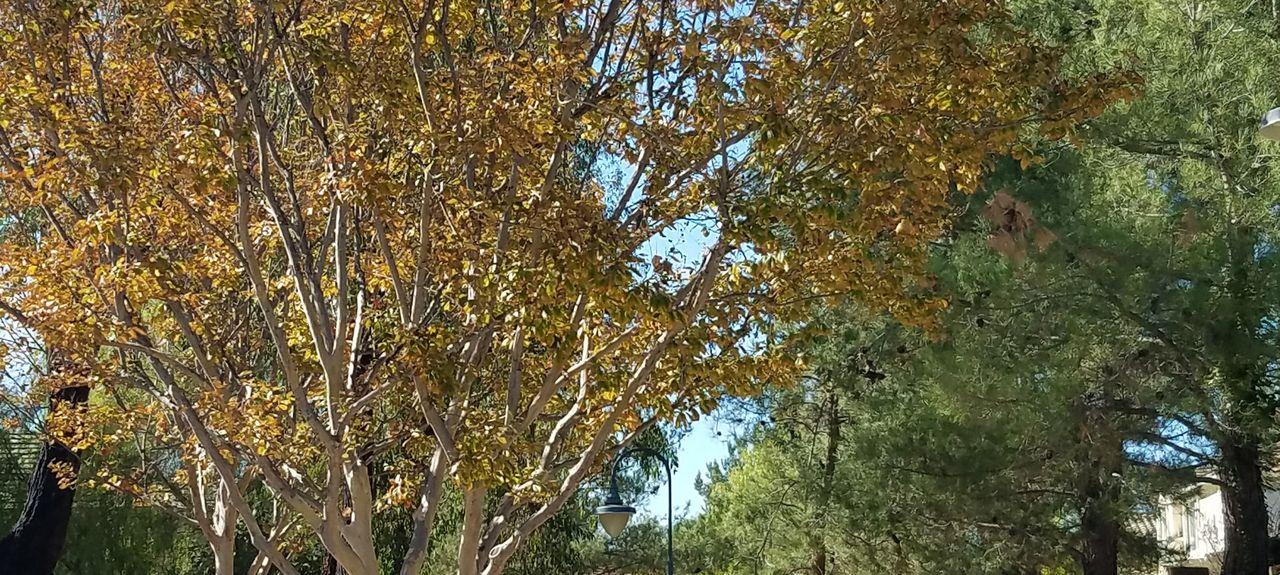 Palomar Mountain, California, United States