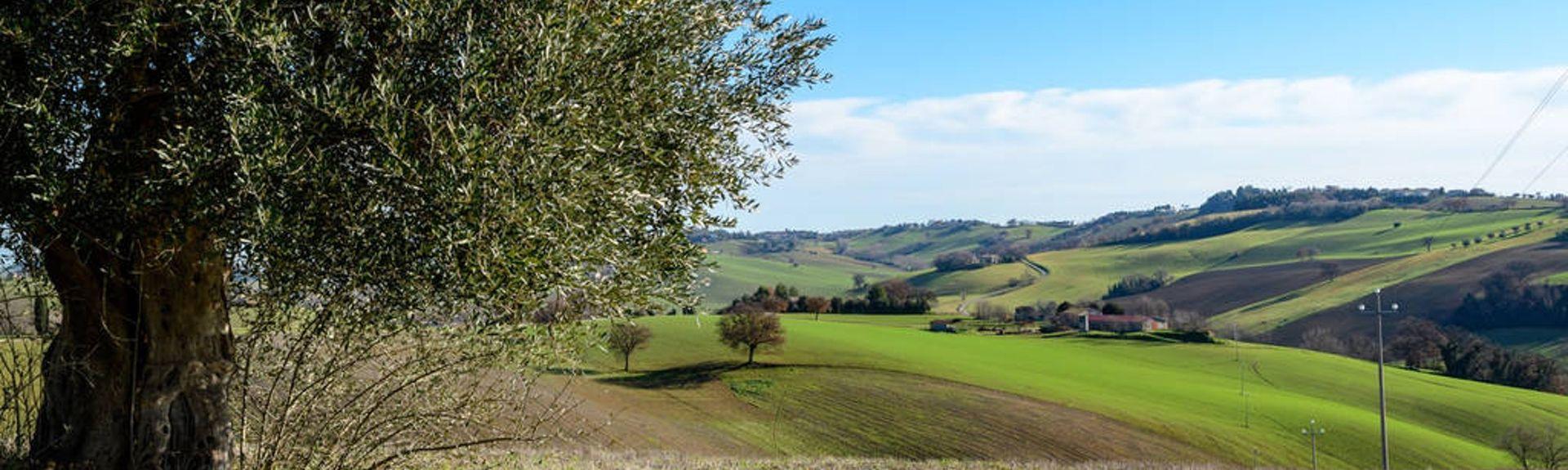 Staffolo, Marche, Italië