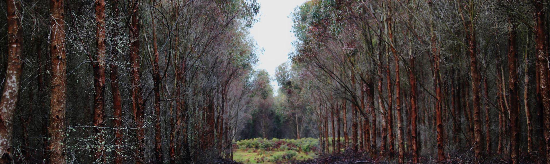 Enfield, VIC, Australia
