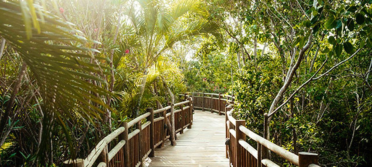 Mareazul (Playa del Carmen, Quintana Roo, Mexique)