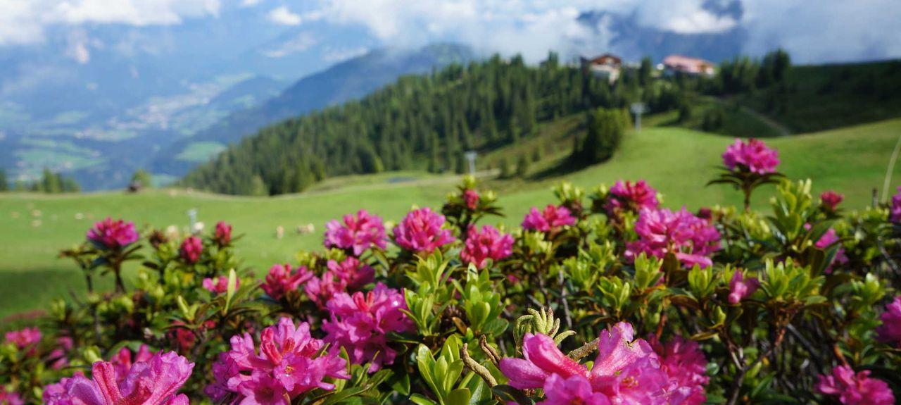 Wörgl, Kufstein District, Tyrol, Austria