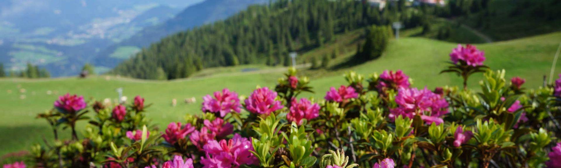 Oberau Wildschönau, Kufstein, Tirol, Austria
