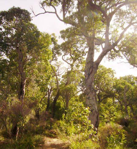 Molloy Island WA, Australia