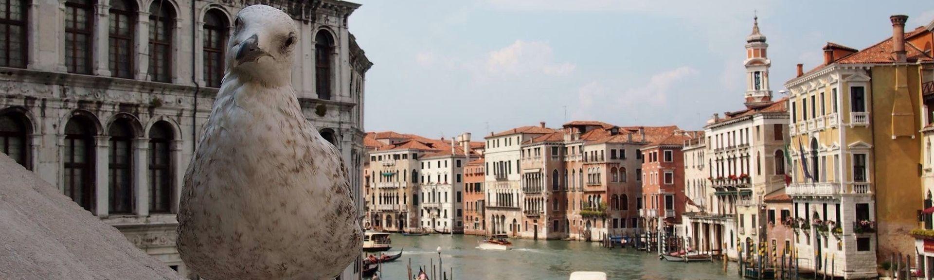 San Polo, Venecia, Véneto, Italia