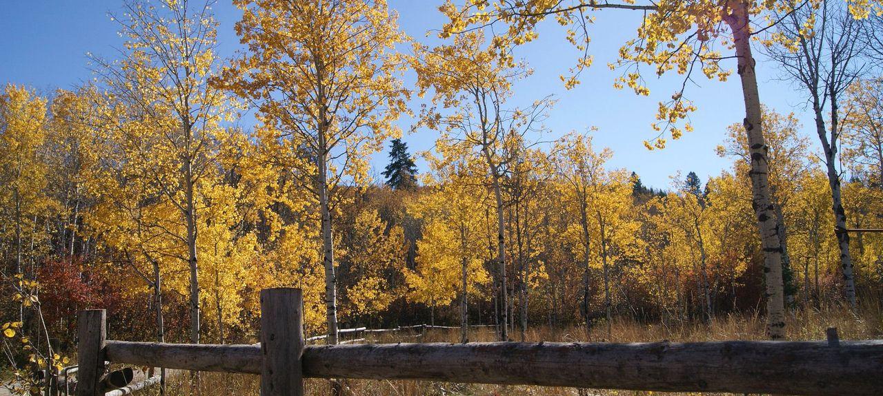 Afton, Wyoming, Vereinigte Staaten