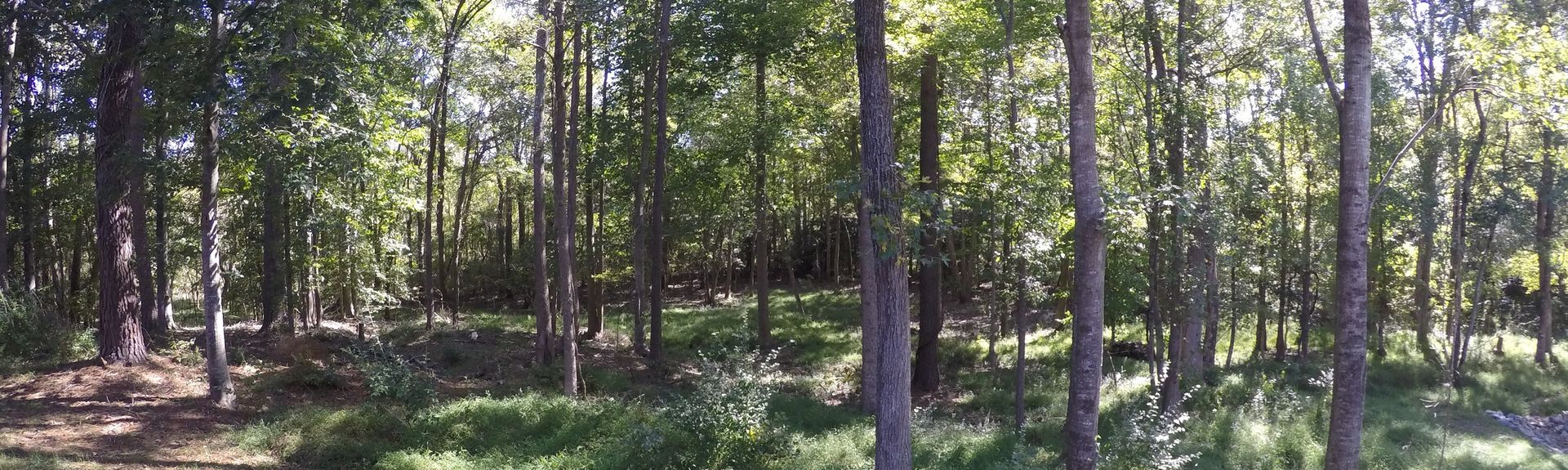 Wake Forest, NC, USA