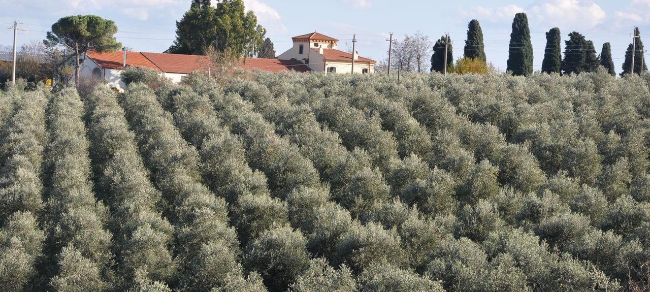 Larino, Campobasso, Molise, Italy