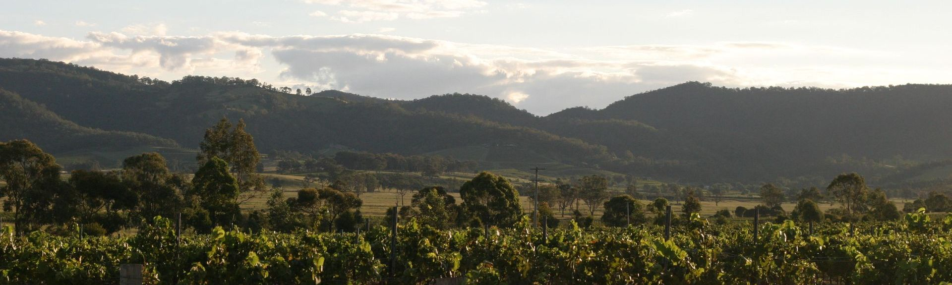 Hunter Valley, Nouvelle Galles du Sud, Australie