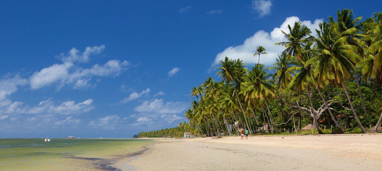 Tamandaré, Mata Meridional Pernambucana, Pernambuco, Brazil