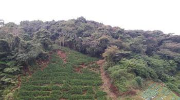 Tanah Rata, Perak, Malaysia