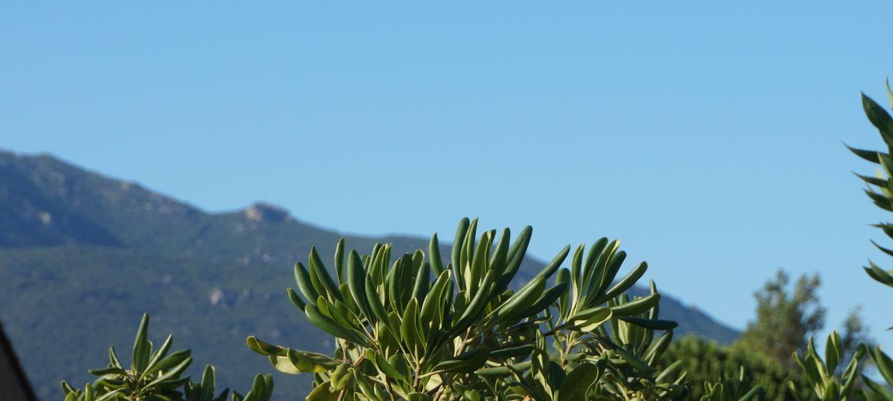 Résidences du Golfe de Lava, Appietto, Corsica, France