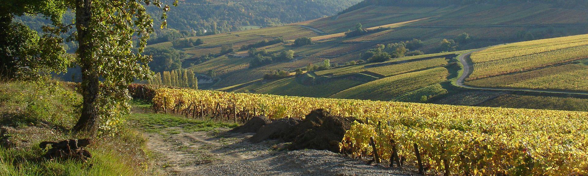 Chassey-le-Camp, Bourgogne-Franche-Comté, Frankrijk