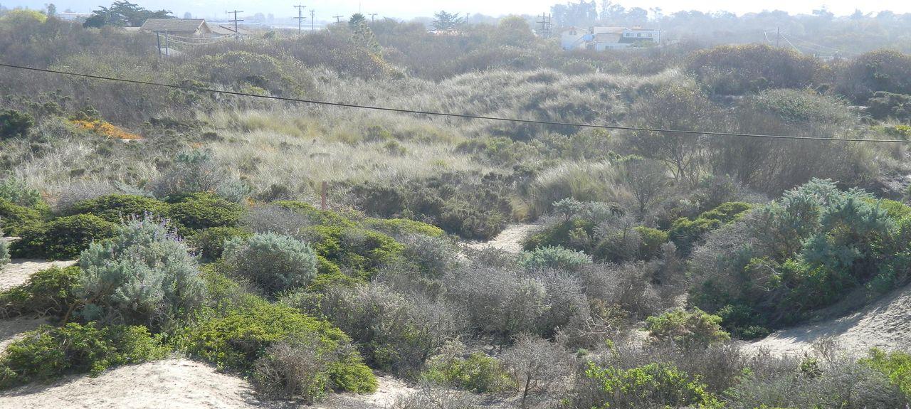 Guadalupe, Californie, États-Unis d'Amérique