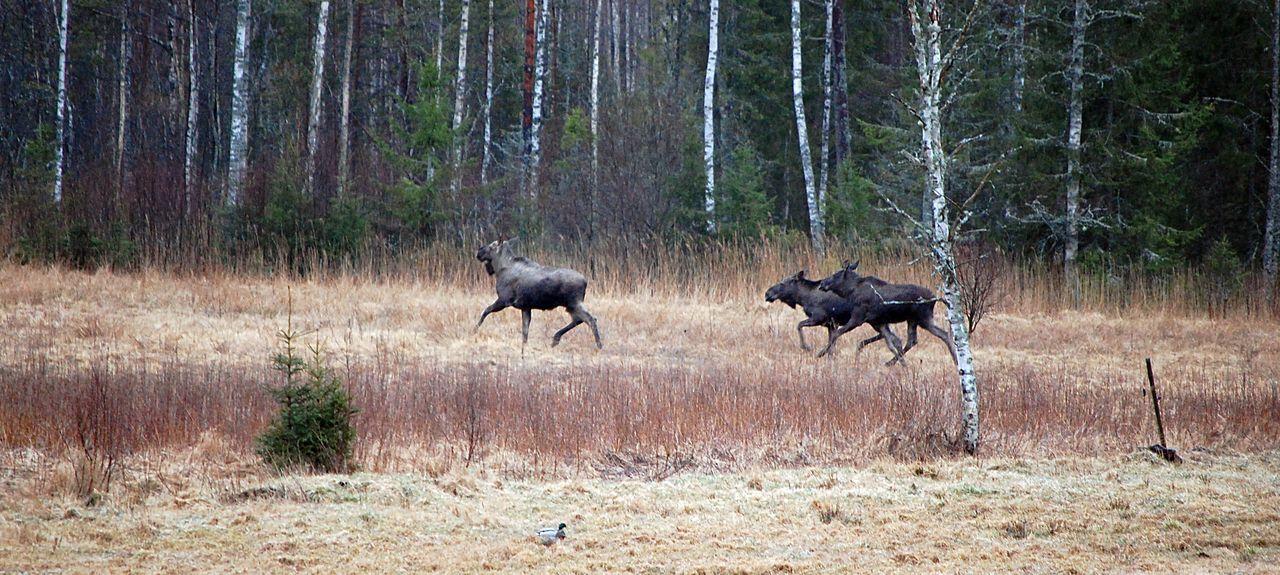 Kronoberg County, Sweden