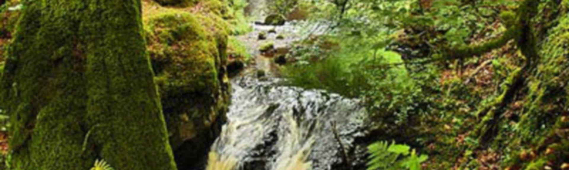 Galloway Forest Park, Castle Douglas, Scotland, UK