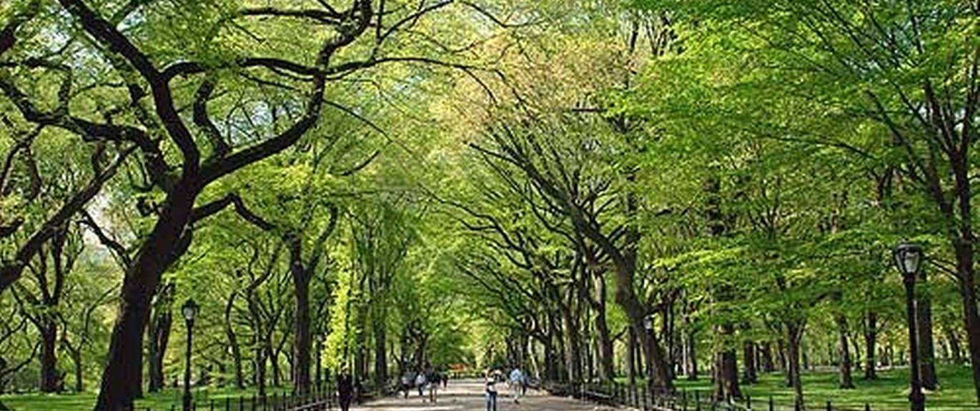 East Harlem, Nova Iorque, Nova Iorque, Estados Unidos
