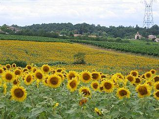 Fontet, France