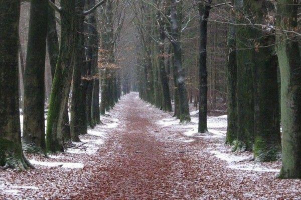 Wageningen, Guéldria, Holanda