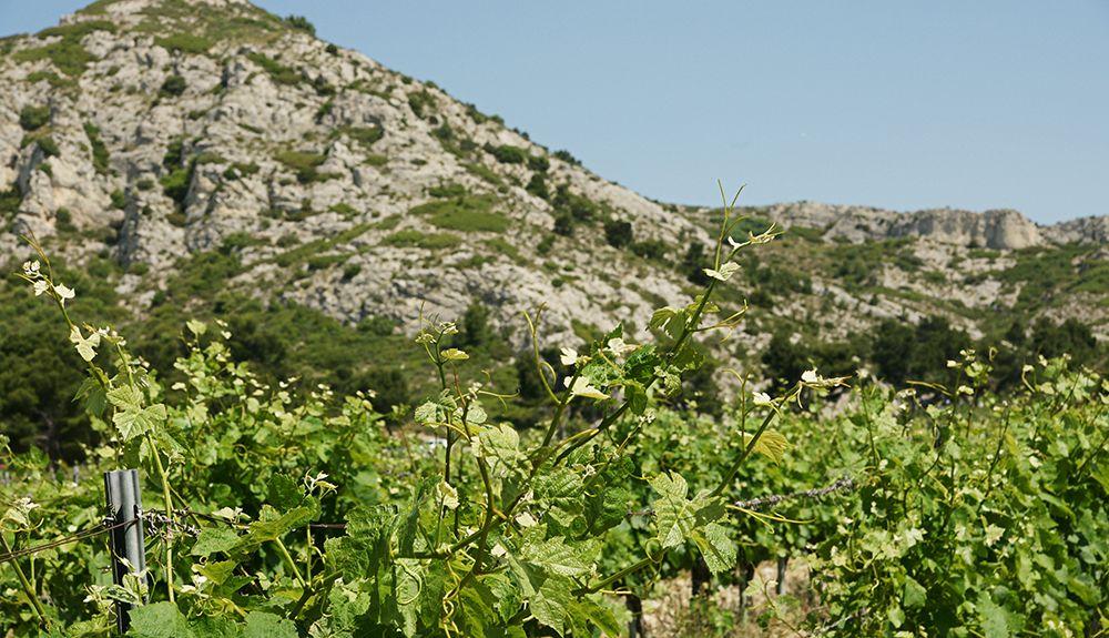Fourques, Gard, Occitanie, Francja