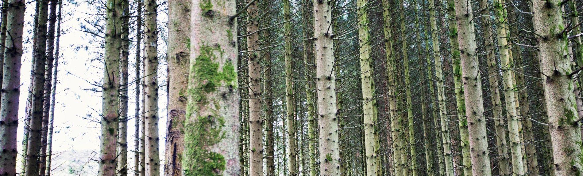 Llanafan-fawr, Builth Wells, Powys, UK