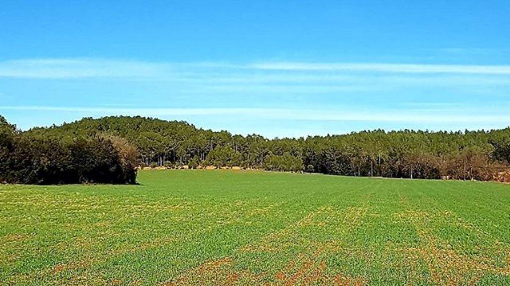 Avinyonet de Puigventos, Catalunha, Espanha
