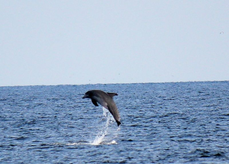 Summer Place, Okaloosa Island, FL, USA
