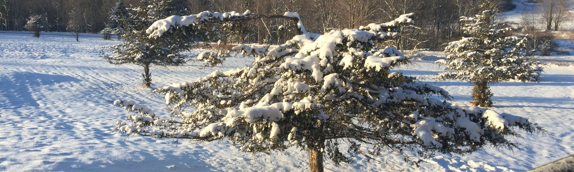 Mountain Top Arboretum, Tannersville, NY, USA