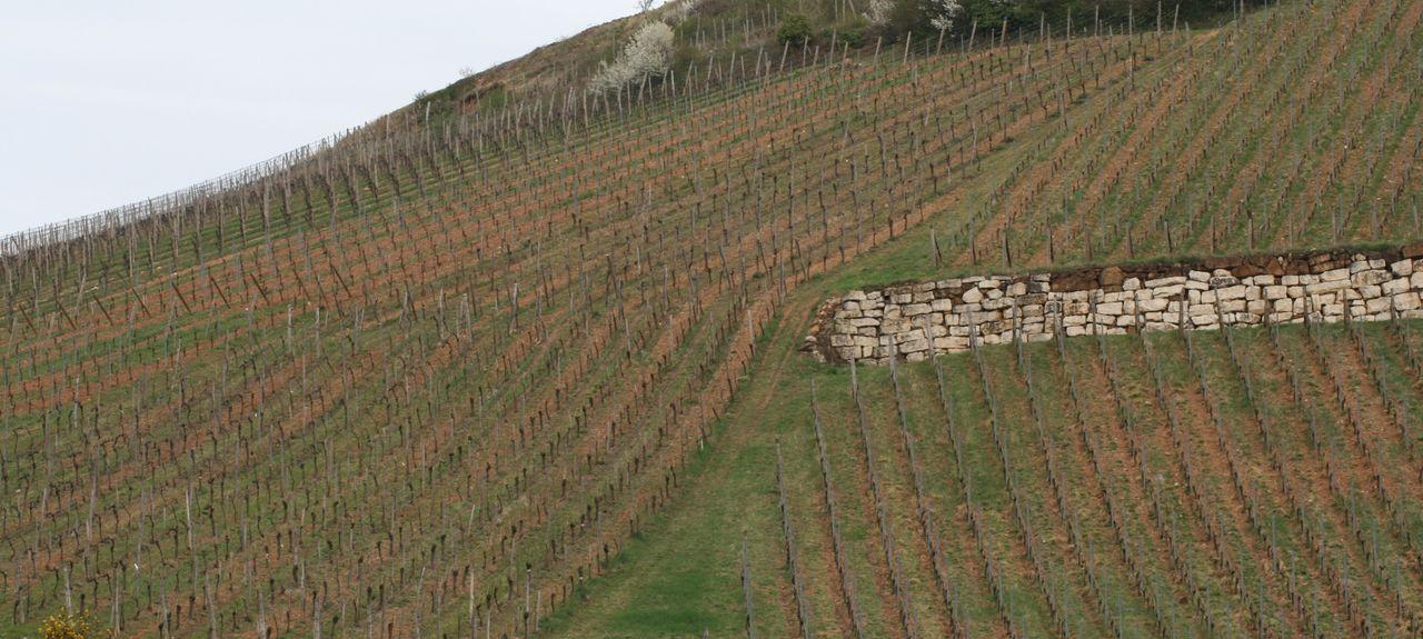 Logelheim, Alsace-Champagne-Ardenne-Lorraine, France