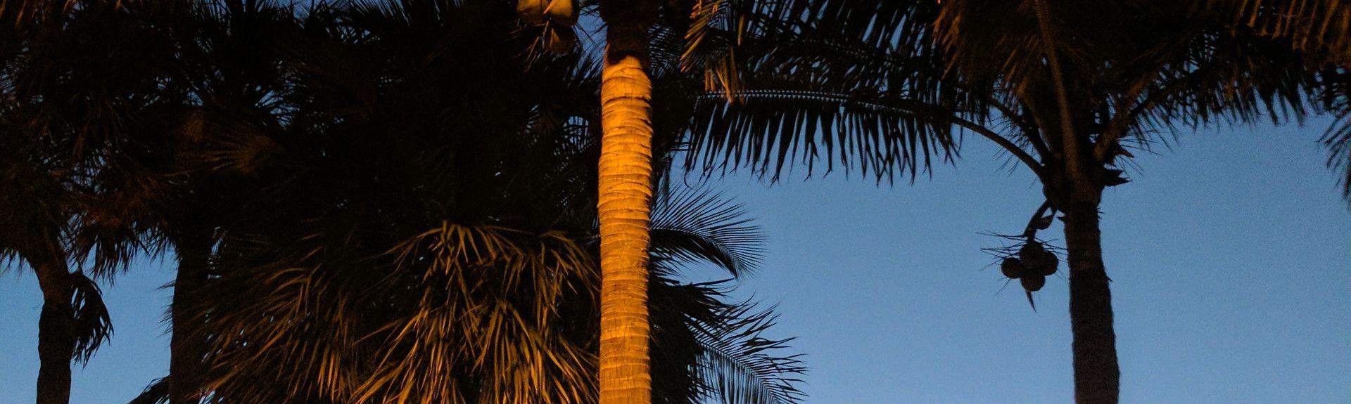 Pinecraft, Sarasota, Florida, Estados Unidos