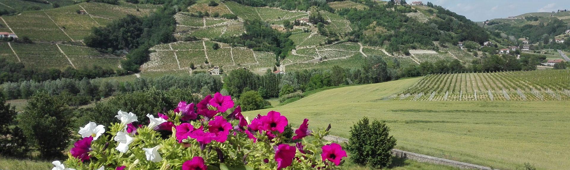 Castino, Cuneo, Piedmont, Italy