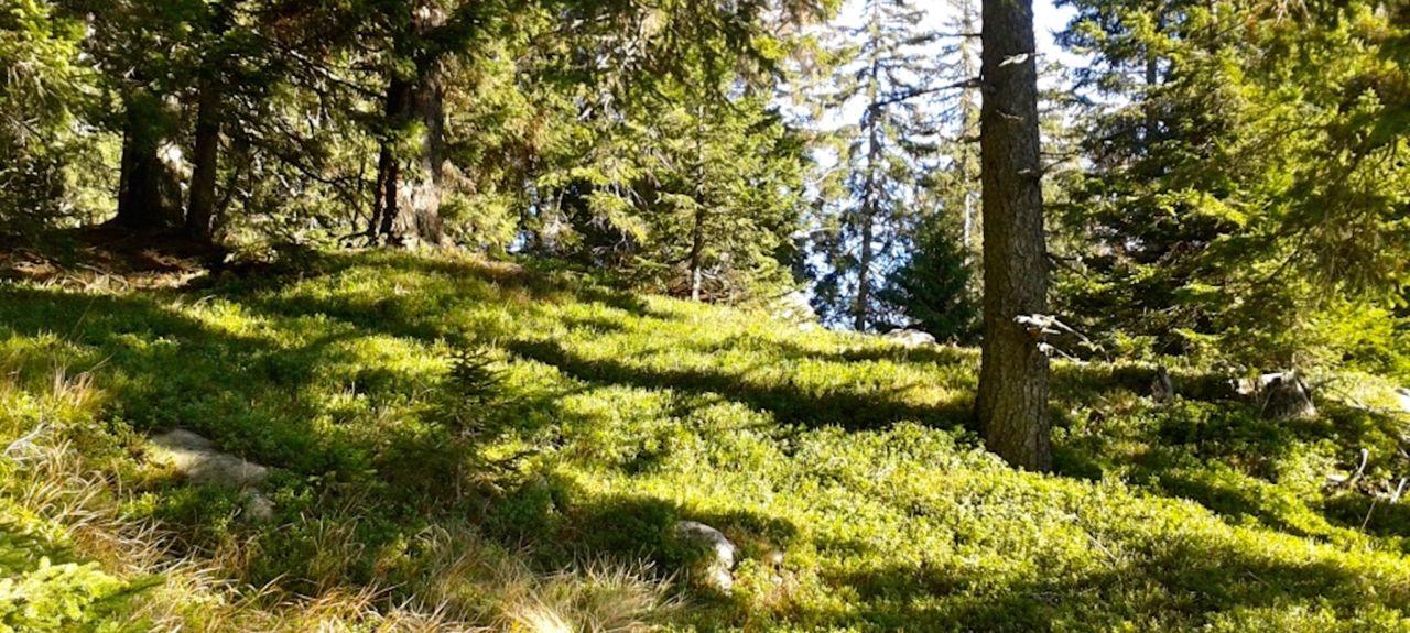 Sover, Trento, Trentino-Alto Adige/South Tyrol, Italy