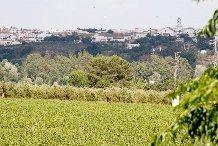 Villanueva del Ariscal, Sevilla, Spain