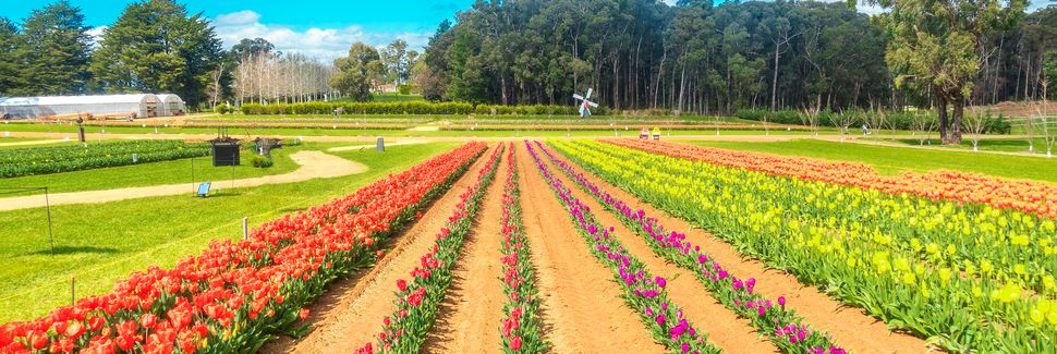 Dandenongs, VIC, Australia