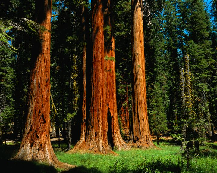 Sequoia National Park, CA, USA