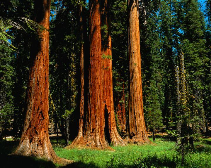 Sequoia National Park, CA, USA