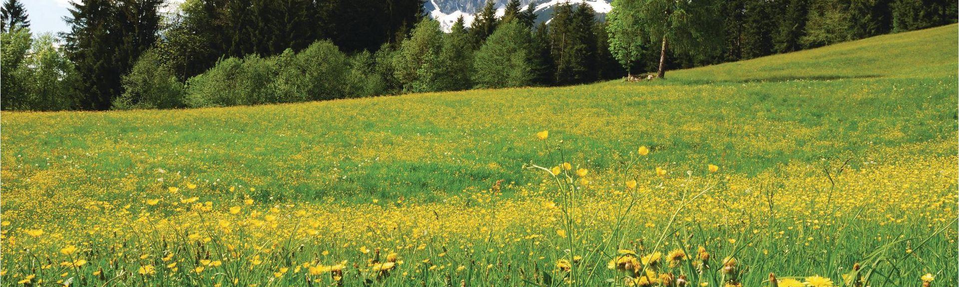 Stelli, Langwies, Switzerland