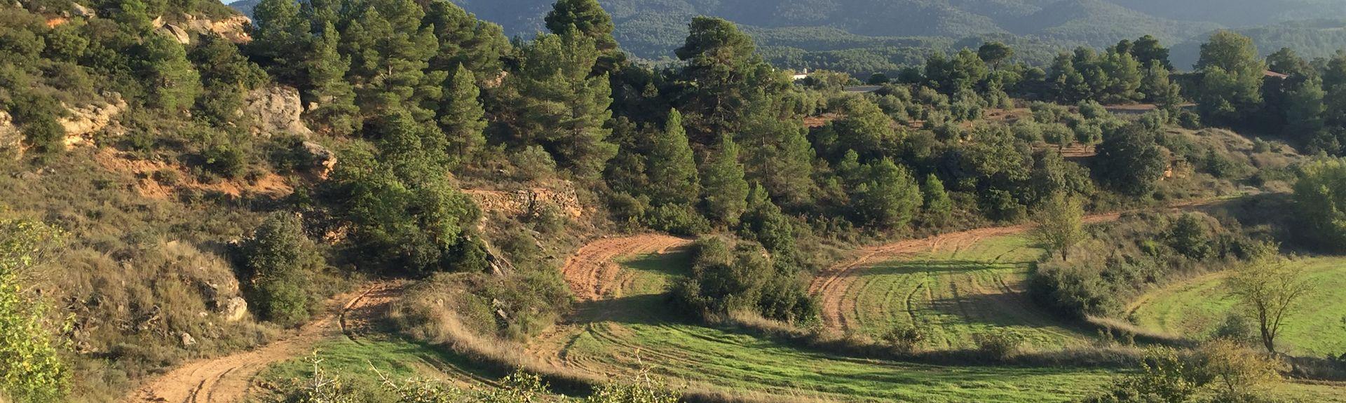 L'Albi, Catalonië, Spanje