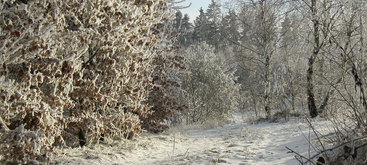 Brilon-Wald, Brilon, Renânia do Norte-Vestfália, Alemanha