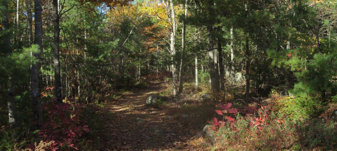 Otis, Maine, Vereinigte Staaten