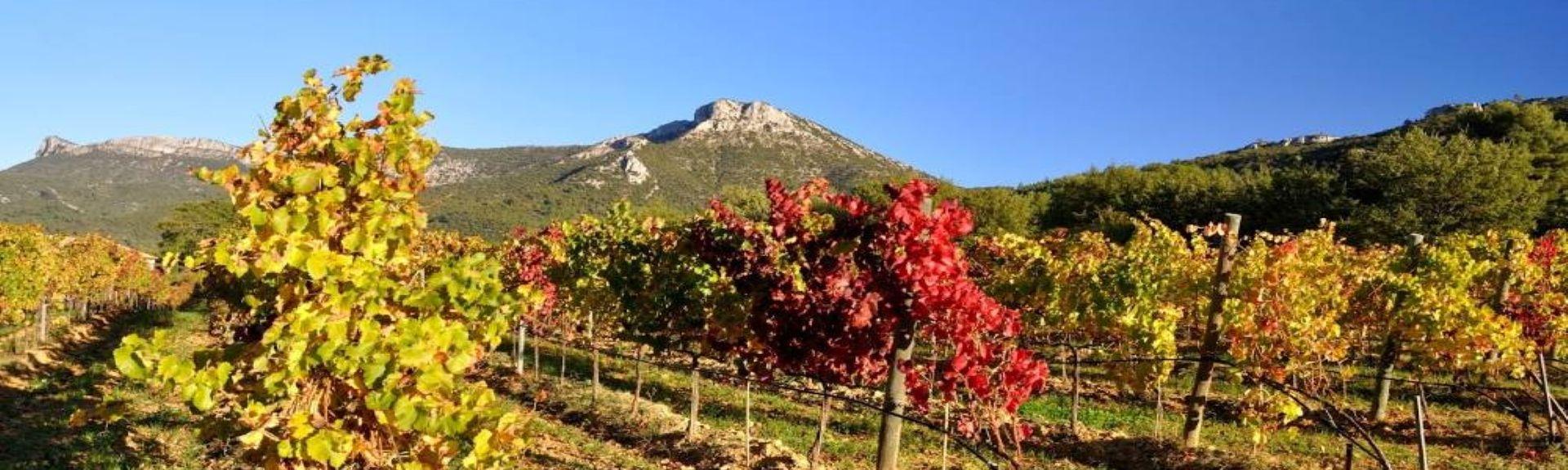 Peypin, Provence-Alpes-Côte d'Azur, França